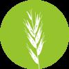 tw-blog-green-needlegrass